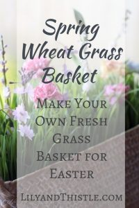 Spring Wheat Grass Basket – Make Your Own Fresh Grass for Easter