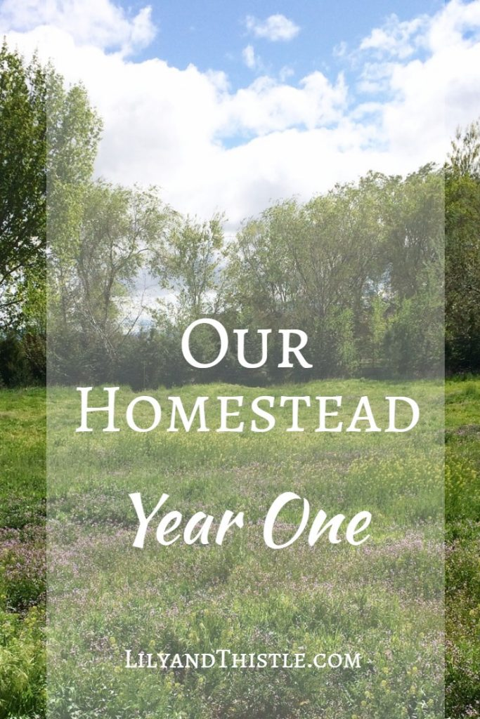 Our Homestead Journey