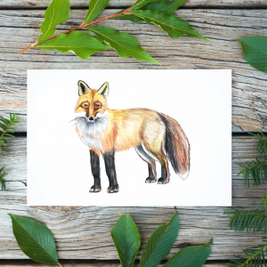 colored pencil drawing of a fox