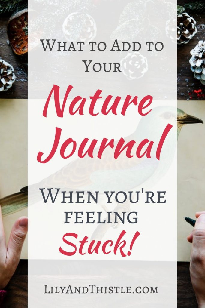 Great ideas of what to add to your nature journal. Nature journaling is great for self care and homeschooling. Charlotte Mason was right!