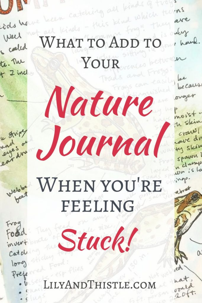 Nature Journaling is so much fun but it can seem hard if you don't know what to put in it. Fun tips for beginners. Nature Journal prompts and ideas.