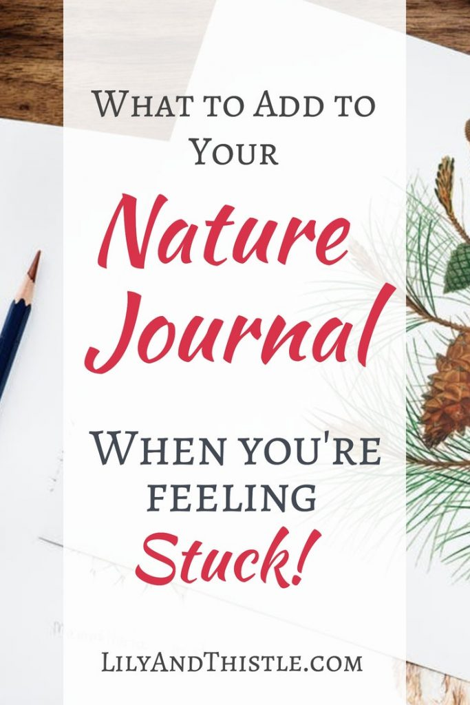Charlotte Mason introduced nature journaling to me but now I kind of do my own thing. Great tips and tricks to make your nature journal a fun place to be. #naturejournal